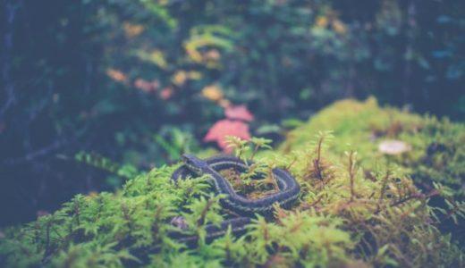 【英語スラング】snakeの意味(陰口を言う人)