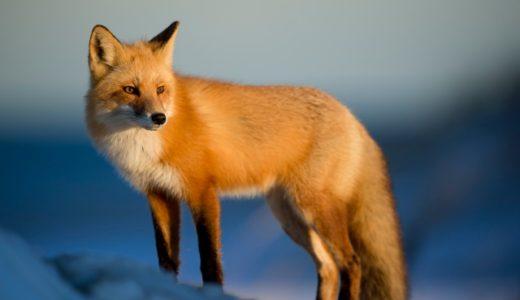 【英語スラング】foxの意味(セクシーな女性)