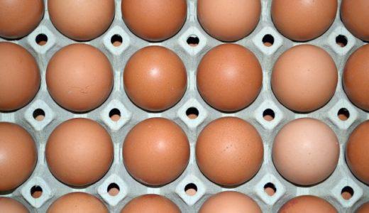 【英語スラング】eggheadの意味(インテリ野郎)