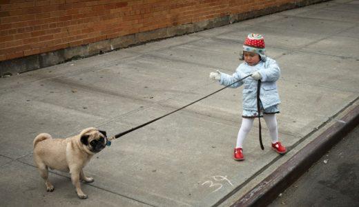 【英語フレーズ】犬の散歩をするの言い方(I walk my dog)